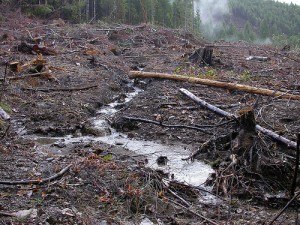 Oregon's Forest Practices Act: failing to protect our water since 1972 (photo by F. Eatherington)