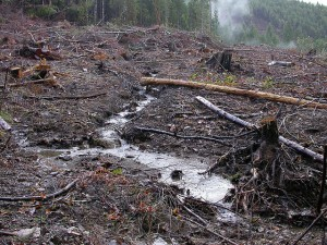 "Forest Practices Act ""stream buffer"""