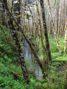 Buster Creek, Clatsop State Forest