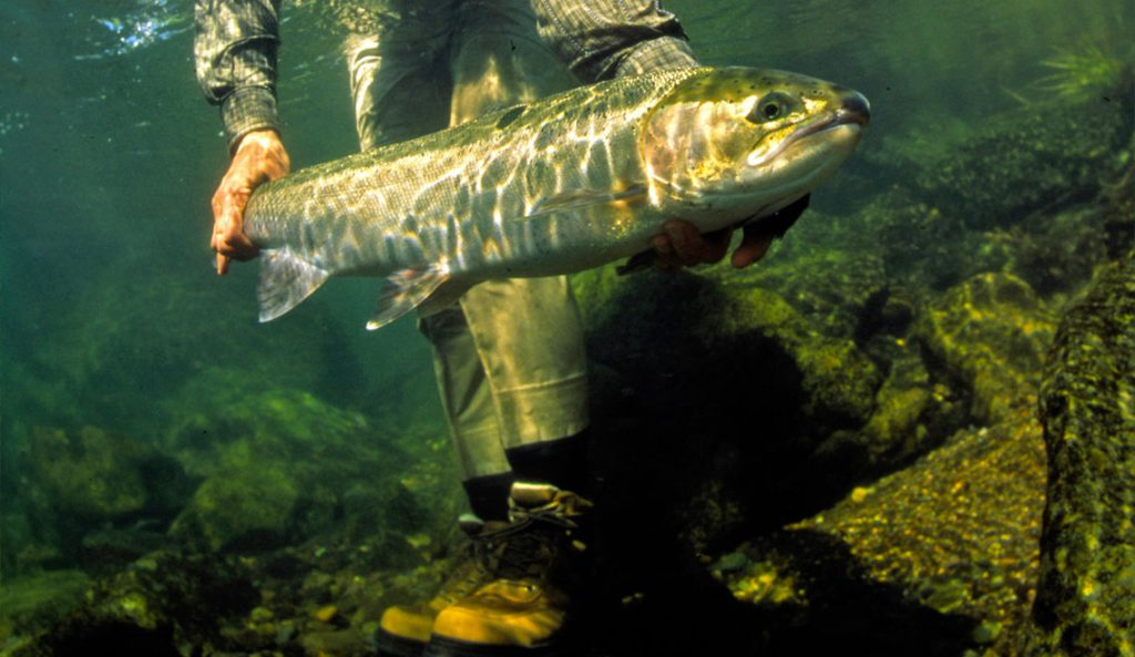 Photo by Brian O'Keefe, courtesy of Wild Salmon Center